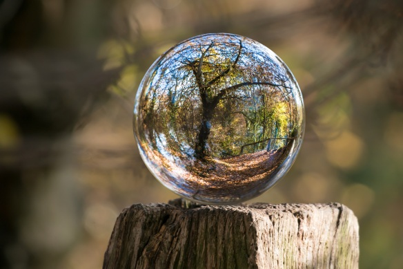 pexels-glass ball on stump-235615